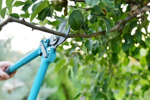 Tree pruning with Local Tree Service in Peoria IL