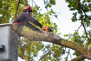 Tree Cutting Service Peoria IL