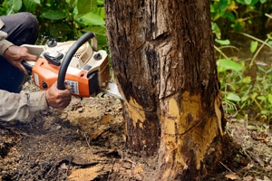 Tree Removal Pekin IL