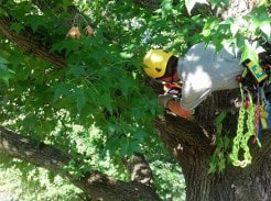 Accessing a tree from the side is a safe way to trim this branch